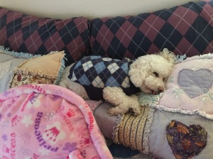 Louie sleeping on the pillows of the guest bed.