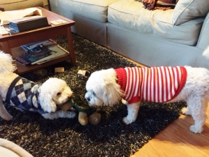 Louie and Sparky play tug-of-war