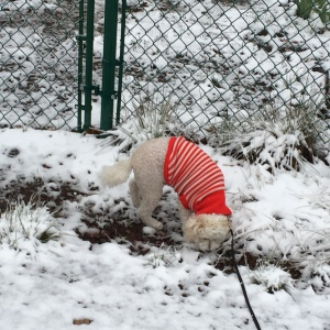 Serena loved the snow
