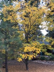 fall-tree-1