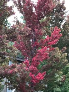 fall-tree-2