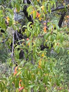 fall-tree-3