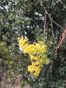 fall-tree-4