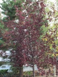 fall-tree-5